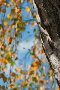 autumn-195629_1280