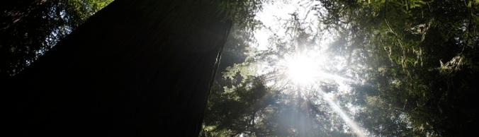 BCALM-mindfulness-meditation-tree-top-slider