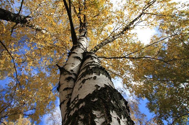 trees-2174226_640