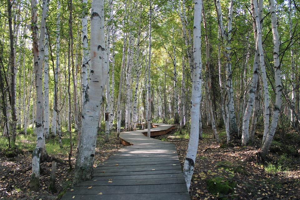 trees-1009862_960_720